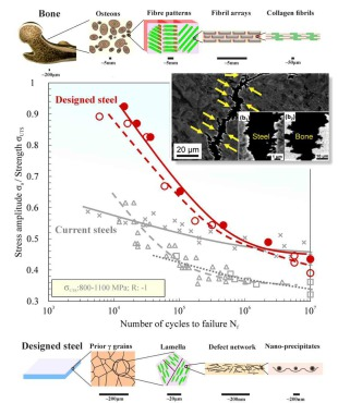 M. Koyama, Z. Zhang, M. Wang, D. Ponge, D. Raabe, K. Tsuzaki, H. Noguchi, C.C. Tasan, Bone-like crack resistance in hierarchical metastable nanolaminate steels. Science 355(6329) (2017)1055-1057