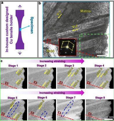 In-situ deformation study conducted in the low angle annular dark-field scanning transmission electron microscope (LAADF-STEM). (a) Schematic illustration of the in-situ deformation set-up: an in-house custom-made Cu tensile holder (in purple) with a TEM