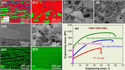 Microstructure, compositional homogeneity state, and tensile properties of an iHEA with nominal composition of Fe49.5Mn30Co10Cr10C0.5 (at.%) in various processing conditions obtained after specific steps of Metallurgical Combinatorial Design and Synthesis