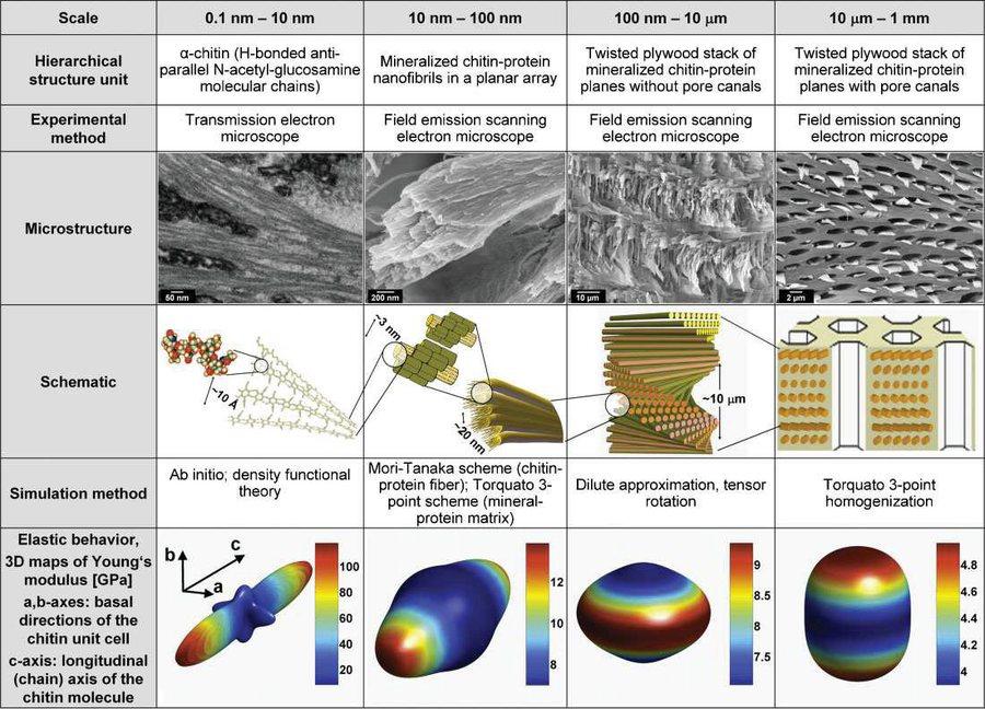 natural materials  biomaterials  biological materials