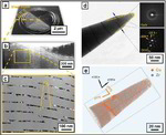 Atom probe tomography, nanolayers, metallic glass