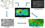 Microstructure digital image correlation crystal plasticity